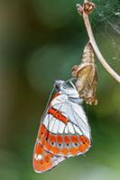 Papillon près du gîte